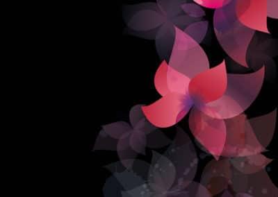 flowers-pink-black